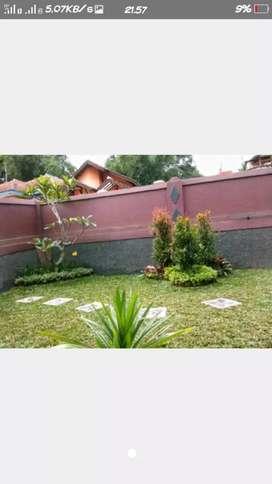 jual rumput dan tanaman hias kontruksi taman rumah dll