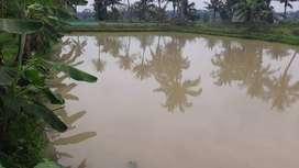 Dijual Tanah Empang dan Darat 1100m2 di Cibogo, Ciseeng - Bogor