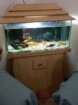 Beautiful Aquarium for sale with all accessories.