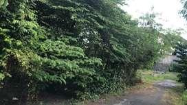 Tanah premium tiying tutul Canggu lingkungan villa