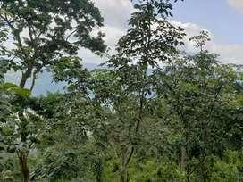 13 acer Land for sale thodupuzha,kanjar