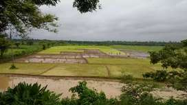 Farming land of 12 bigha