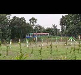 FARM HOUSE AT PONDY_KILIYANUR WITH 83 TREES AND 60K INCOME ON ROAD