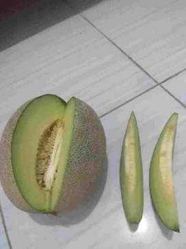 Melon Sky Rocket