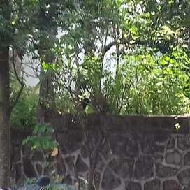 Tanah Bukit Bougenville Raya Sendang Mulyo Semarang