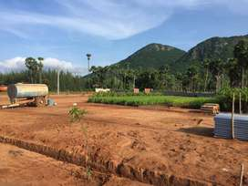 Anakapalle Typuram Sandalwood project is The best investment