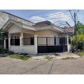 Disewakan Rumah SHM Darmo Indah Selatan 1 Lantai Murah