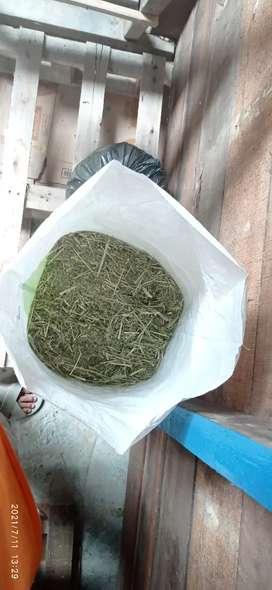 Rumput timothy hay (makanan utama kelinci) 1 kg