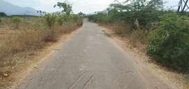 2 Acre empty agriculture land for sale in near vadipatti