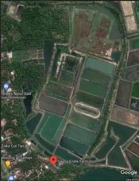 Dijual Murah Tanah Ex Tambak Udang di Banten Selatan