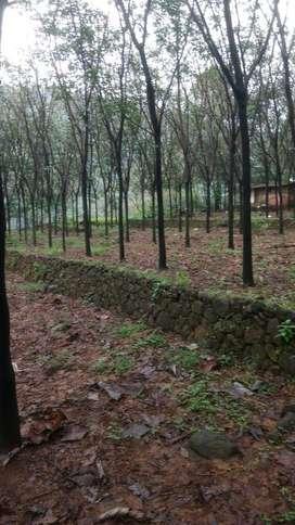 Rubber plantation near Mundakayam 10 acre ready to tapping taring road