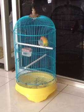 Burung love bird fullset
