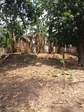 Jual rumah kuno gan hitung tanah milik ortu mau pindah