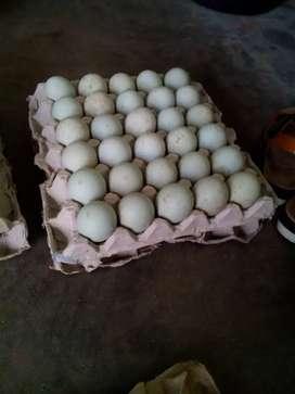 Telur asin istimewa
