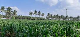 Agricultural land for 4acre sale periyapatti area