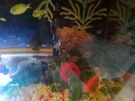Decorations aquarium
