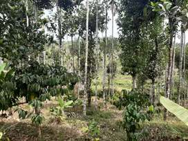 5 acre resort  cum agriculture  land near Vazhavatta