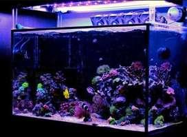 Aquarium Air Laut