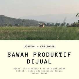 Jual Sawah tanah di Bogor sangat produktif dan strategis