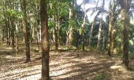 Tanah Kebun Karet Luas 27 Hektar