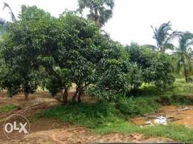 9 acres of Agricultural land for sale in Periyapodhu