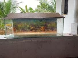 Acquarium Set- for sale