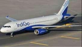 INDIGO AIRLINES JOBS FOR GROUND STAFF.