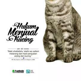 Terimakasih banyak untuk para pecinta kucing