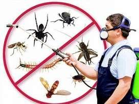 Pest Control for Home