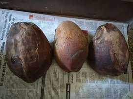 Coconuts with water for Sale, with outside shell, Rs.40 each