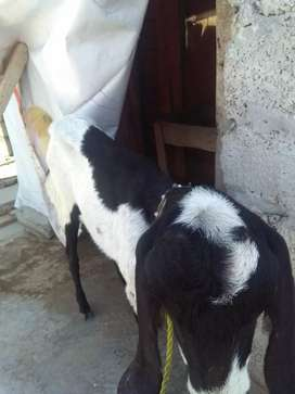 Bakri with male baby