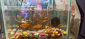 Good aquarium