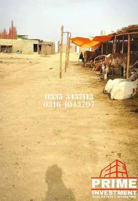 Lands for Farmhouse and cattle farm available