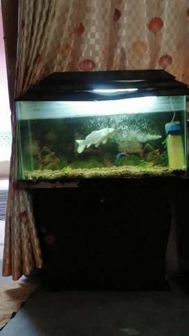 Equirium for sale 1 fish h full white bari fish ha1 or bakii 5 fish o