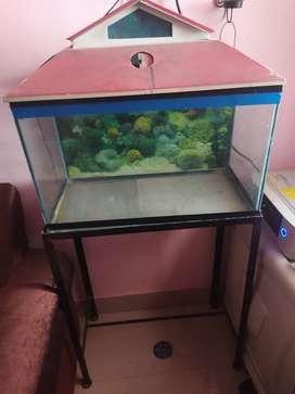 Glass aquarium with stand