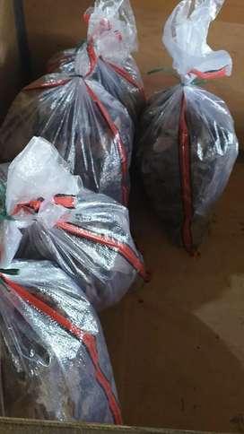 Jangkrik alam 38/kg depok