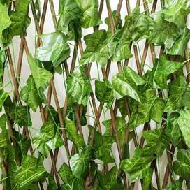 daun hias daun rambat pagar hias taman rumah daun pagar sekat rumah