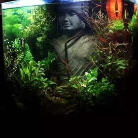 Buddha planted aquarium