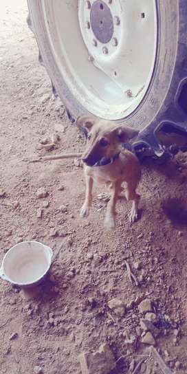 I m sell my dog