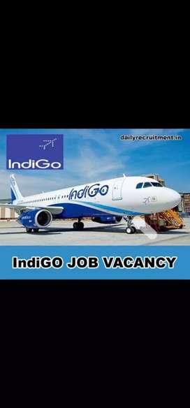 Indigo airlines urgent hiring