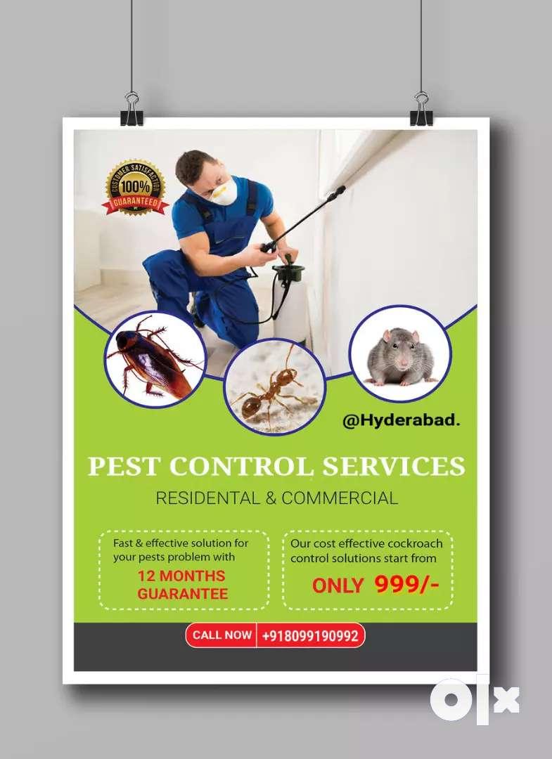Cockroaches 1 year warranty 0