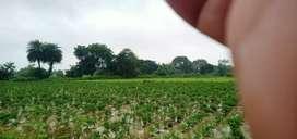 Sarsaul se Lagbhag 5 km par 1.75 bigha agriculture Jamin hai