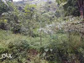 Property in wayanad...
