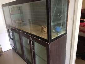 5 ft  Aquarium for sale
