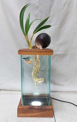 Aquarium Bonsai Kelapa