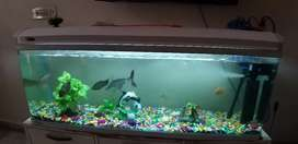 Only 1 month old 5ft imported curved fish aquarium