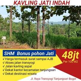 Dijual tanah sudah dipatok BPN gratis pohon jati emas include surat