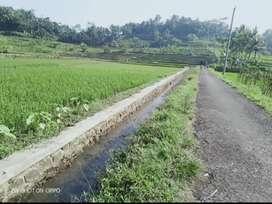 Sawah Produktif Ajibarang Purwokerto