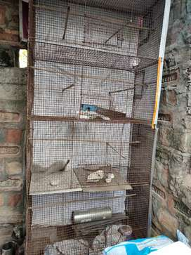 Bird Cage available...