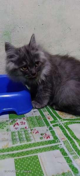Lepas adopsi kucing kesayangan chat aja gan